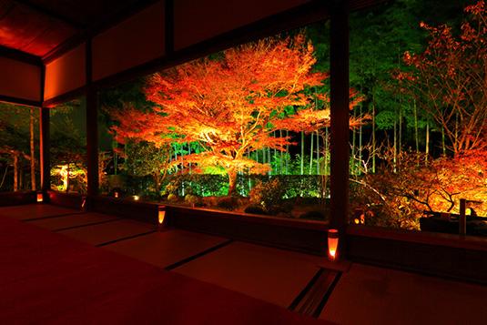 紅葉2017!京都ライトアップスポット【穴場】紹介