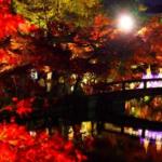 紅葉2017!京都ライトアップスポット【おすすめ】人気の岡崎エリア!